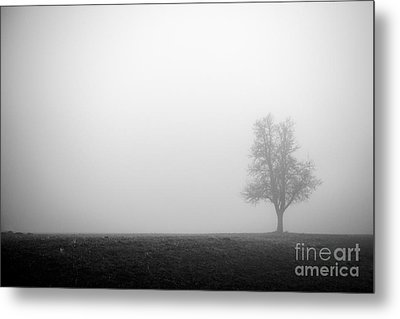 Alone In The Fog - Bw Metal Print by Hannes Cmarits