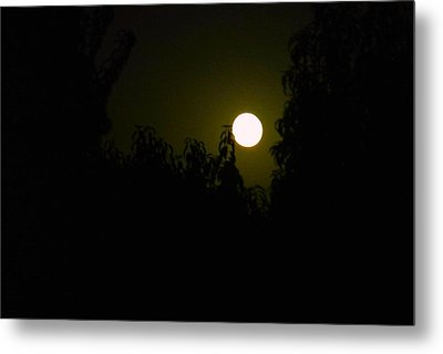 Metal Print featuring the photograph Alone In The Night by Tamara Bettencourt