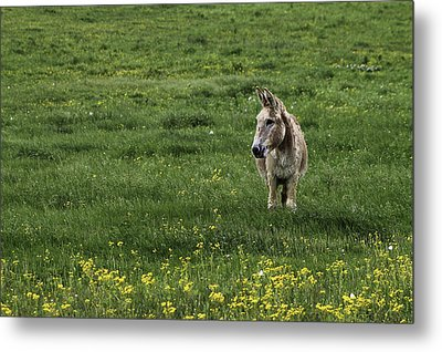 Alone Metal Print by Kimberly Danner