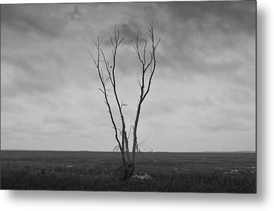 Metal Print featuring the photograph Alone  by Ricky L Jones