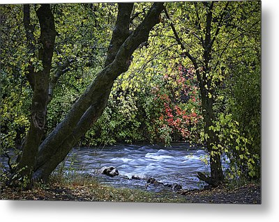 Along Swift Waters Metal Print by Priscilla Burgers