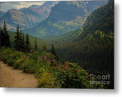 Along The Path To Iceburg Lake 21 Metal Print by Natural Focal Point Photography