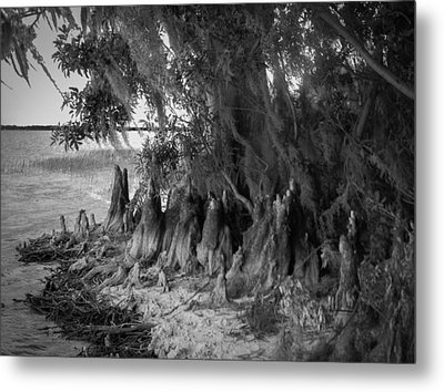 Along The Shore  Metal Print by Christy Usilton