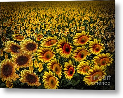 Along With The Wind Metal Print by Angelika Drake