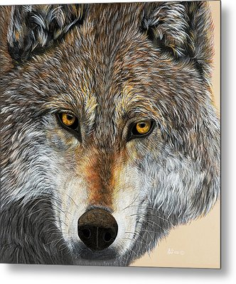 Metal Print featuring the painting Alpha Male by Debbie Chamberlin