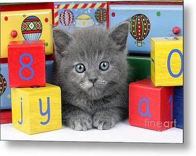 Alphabet Cat Ck415 Metal Print by Greg Cuddiford