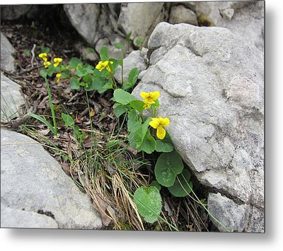 Metal Print featuring the photograph Alpine Beauty 1 by Pema Hou