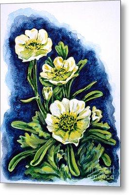 Alpine Ranunculus Metal Print by Zaira Dzhaubaeva