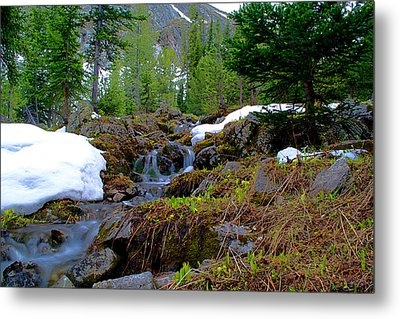Metal Print featuring the photograph Alpine Spring  by Kevin Bone