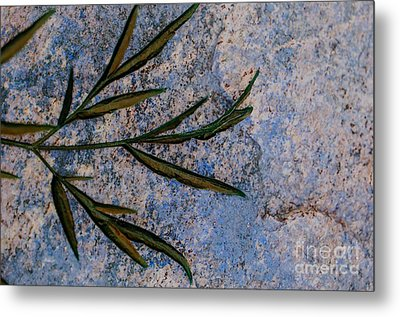Metal Print featuring the photograph Altered State by Judy Wolinsky