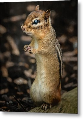 Metal Print featuring the photograph Alvin by Linda Karlin