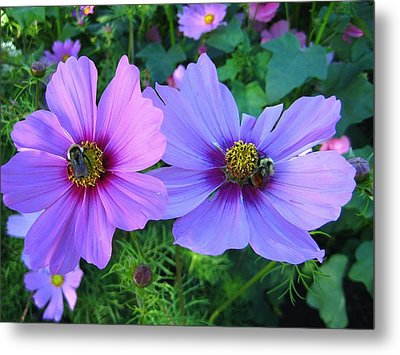 Always Loved Cosmos Metal Print by Shirley Sirois