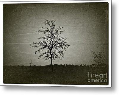 Am Trees - No.226 Metal Print