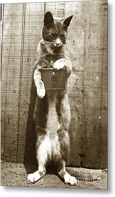 Metal Print featuring the photograph Amateur Feline Fotografer Cat With A Box Camera  Historical Photo 1900 by California Views Mr Pat Hathaway Archives