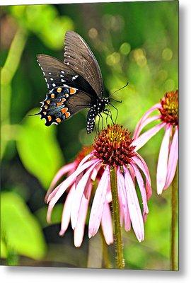 Amazing Butterfly Metal Print by Marty Koch