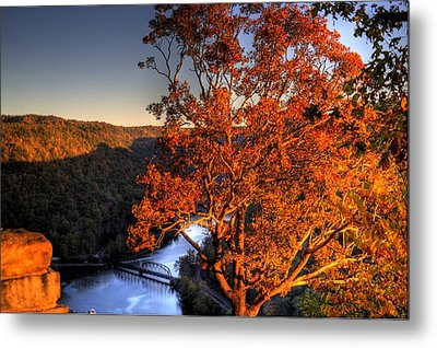 Amazing Tree At Overlook Metal Print by Jonny D