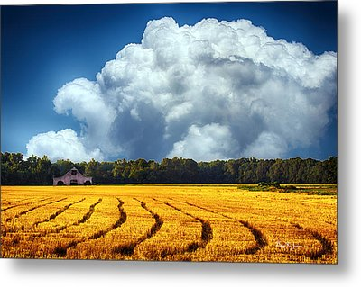 Amber Fields Metal Print