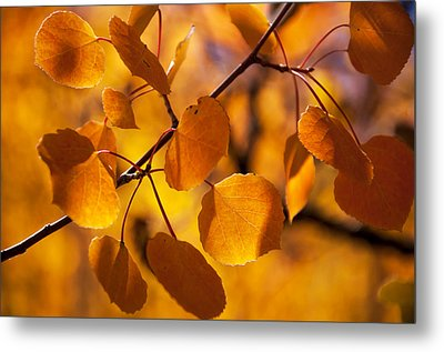 Amber Leaves Metal Print