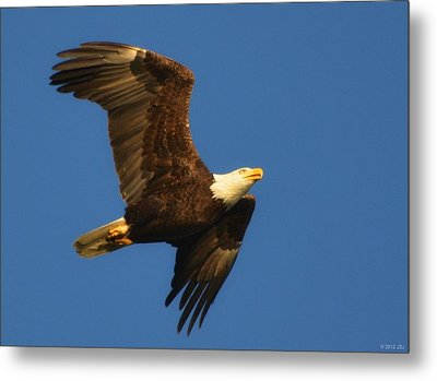 Metal Print featuring the photograph American Bald Eagle Close-ups Over Santa Rosa Sound With Blue Skies by Jeff at JSJ Photography