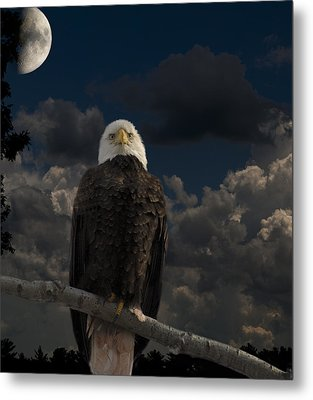 American Bald Eagle Composite Metal Print by Thomas Young
