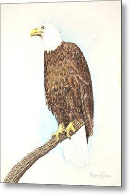 American Bald Eagle Watching Metal Print by Dag Sla