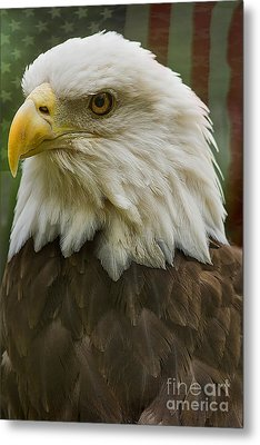 American Bald Eagle With American Flag Background Metal Print by Anne Rodkin