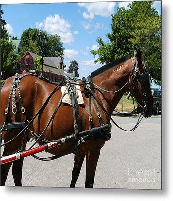American Bay Quarter Horse Metal Print