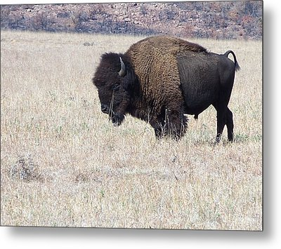 Metal Print featuring the photograph American Bison by Alan Lakin