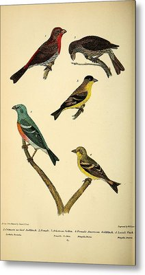 American Finches Metal Print by Philip Ralley