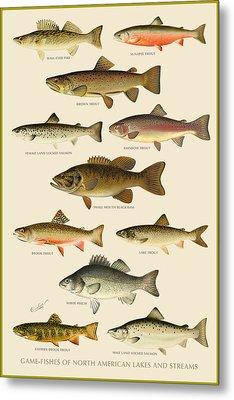 American Game Fish Metal Print by Gary Grayson