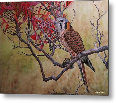 American Kestrel Female Metal Print by Ken Everett