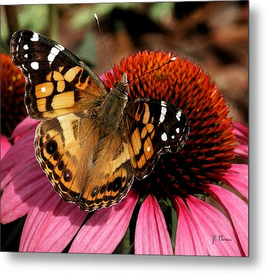 Metal Print featuring the photograph American Lady  by James C Thomas
