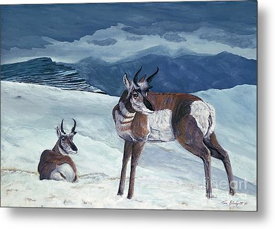 American Pronghorn Metal Print by Tom Blodgett Jr