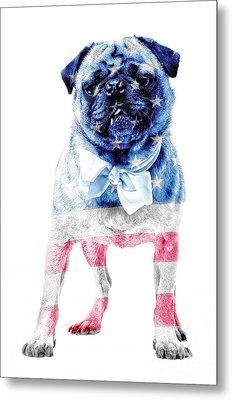 American Pug Metal Print by Edward Fielding