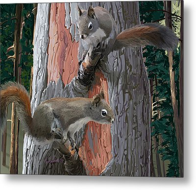 American Red Squirrels Metal Print