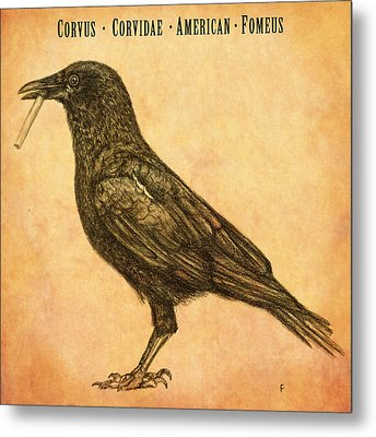Metal Print featuring the drawing American Smoking Crow by Penny Collins