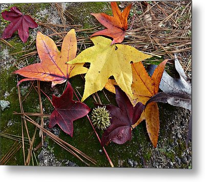 Metal Print featuring the photograph American Sweetgum Autumn Display by William Tanneberger