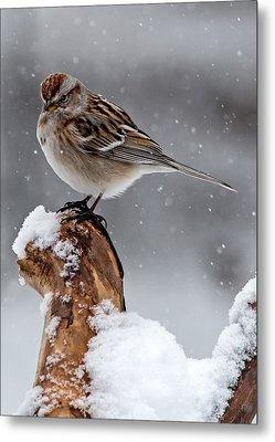 American Tree Sparrow In Snow Metal Print