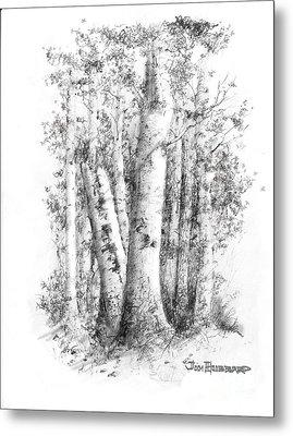 American White Birch Metal Print by Jim Hubbard