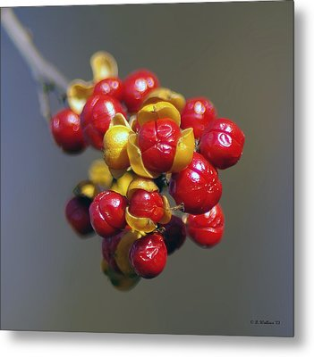 American Winterberry Metal Print by Brian Wallace