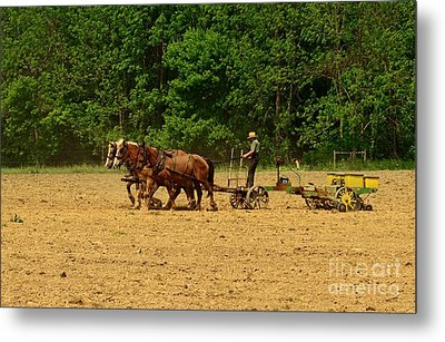 Amish Farmer Tilling The Fields Metal Print by Paul Ward