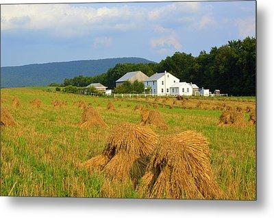 Amish Harvest #1 - Milroy Pa Metal Print