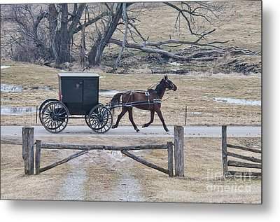 Amish Horse And Buggy March 2013 Metal Print