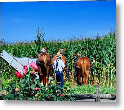 Amish Plowing Metal Print by Gena Weiser