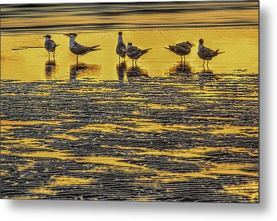 Among Friends Metal Print by Marvin Spates