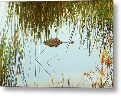 Among The Reeds Metal Print by Lynda Dawson-Youngclaus