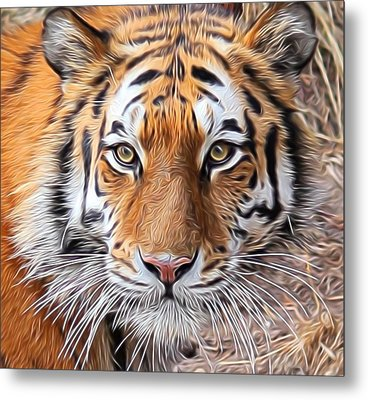 Amur Tiger Portrait Metal Print by Diane Alexander