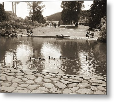 Metal Print featuring the photograph An Afternoon At Botanical Garden by Hiroko Sakai