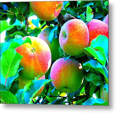 An Apple A Day Metal Print by Kay Gilley