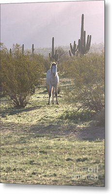 Metal Print featuring the photograph An Arizona Morning by Ruth Jolly